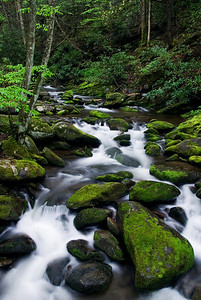 Spring At Roaring Fork, Great Smoky Mountains