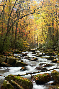 An autumn scene along Big Creek, Great Smoky Mountains