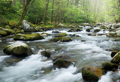 A spring scene along Big Creek, Great Smoky Mountains.