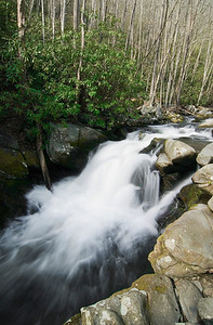 Middle Prong of the Little River along Lynn Camp Prong Trail, Tremont region of the Great Smoky Mountains.