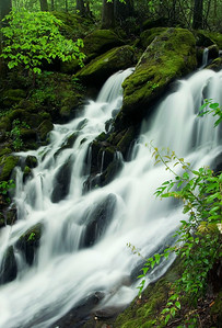 Cascade At Tremont, Great Smoky Mountains
