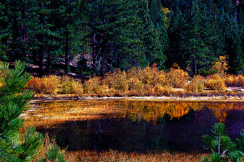 POND<br /> Galena Creek Regional Park, Reno, Nevada