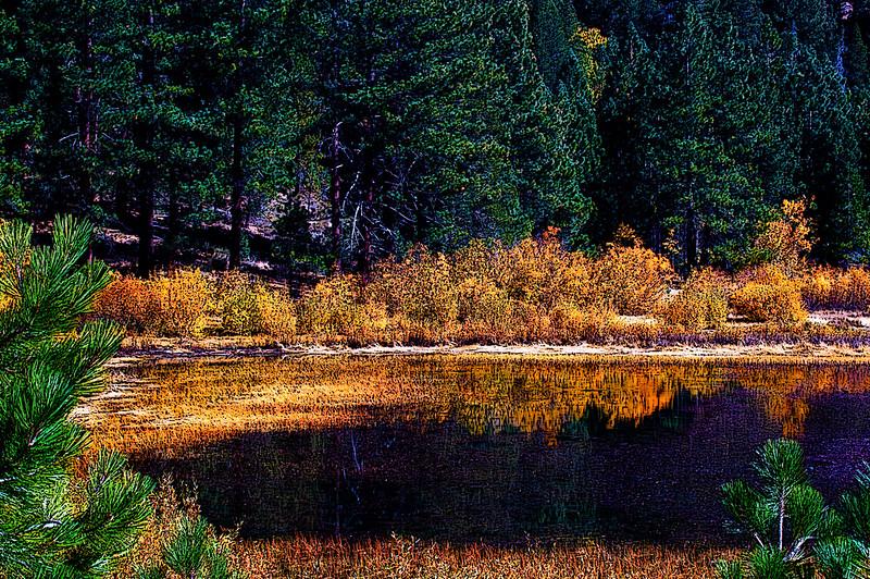 POND<br /> Galena Creek Regional Park, Reno, Nevada