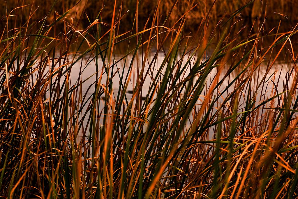 Tavasci Marsh