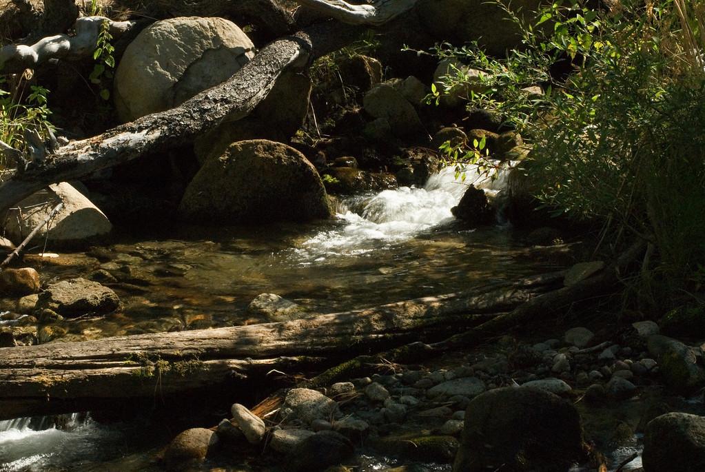 Water & Logs