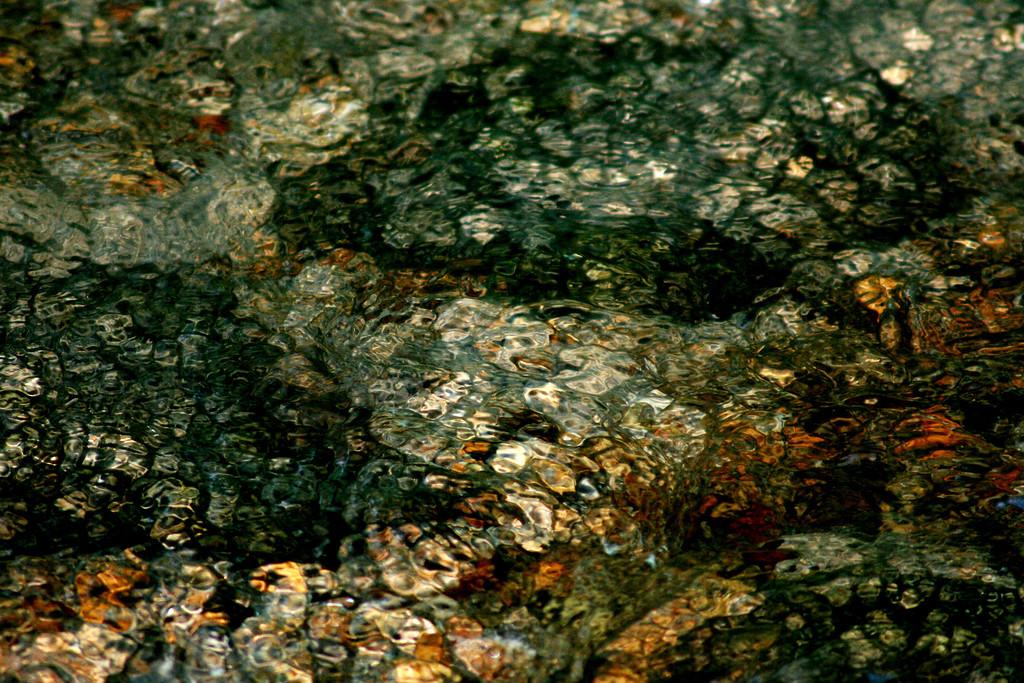 River Bottom