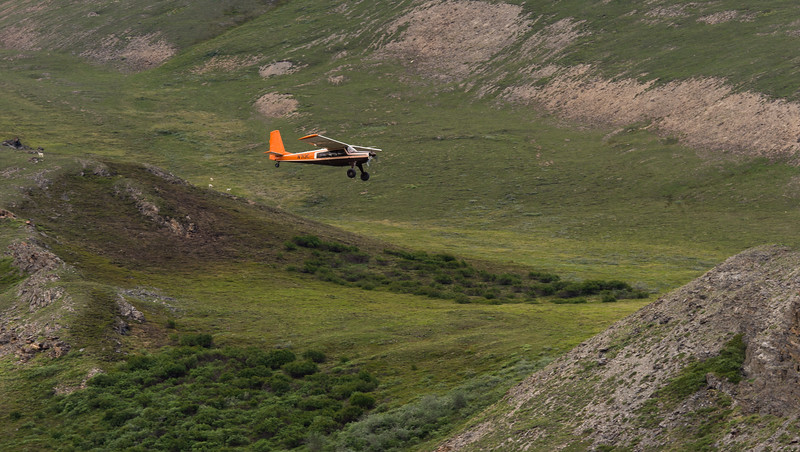 Wright's Helio Courier, Dall Sheep in BG.