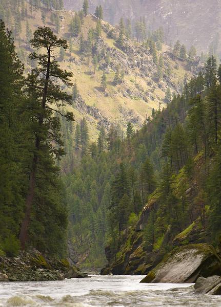 Main Salmon - Love those Ponderosa Pines