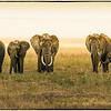 Serengeti Dawning