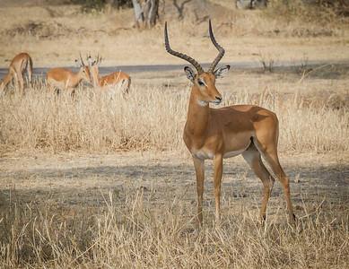 Tanzania- Wildlife