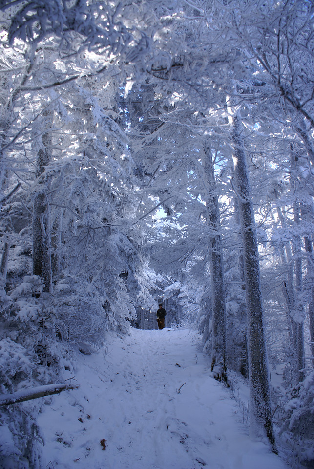 My brother Tim Glenn stands under a canopy of frozen snow encrusted trees on Roan Mountain's Cloudland Trail