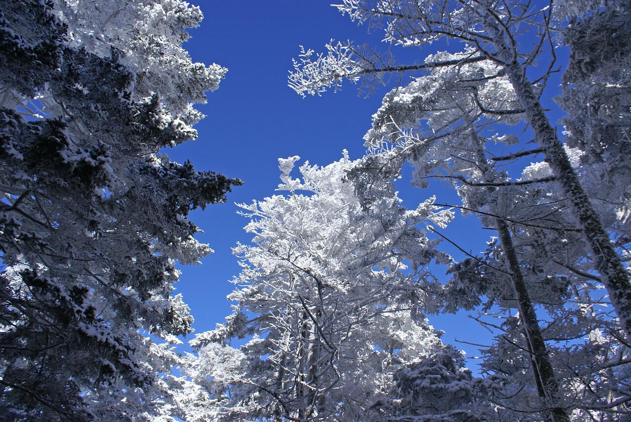 Beautiful frozen trees - Roan Mountain, winter 2008