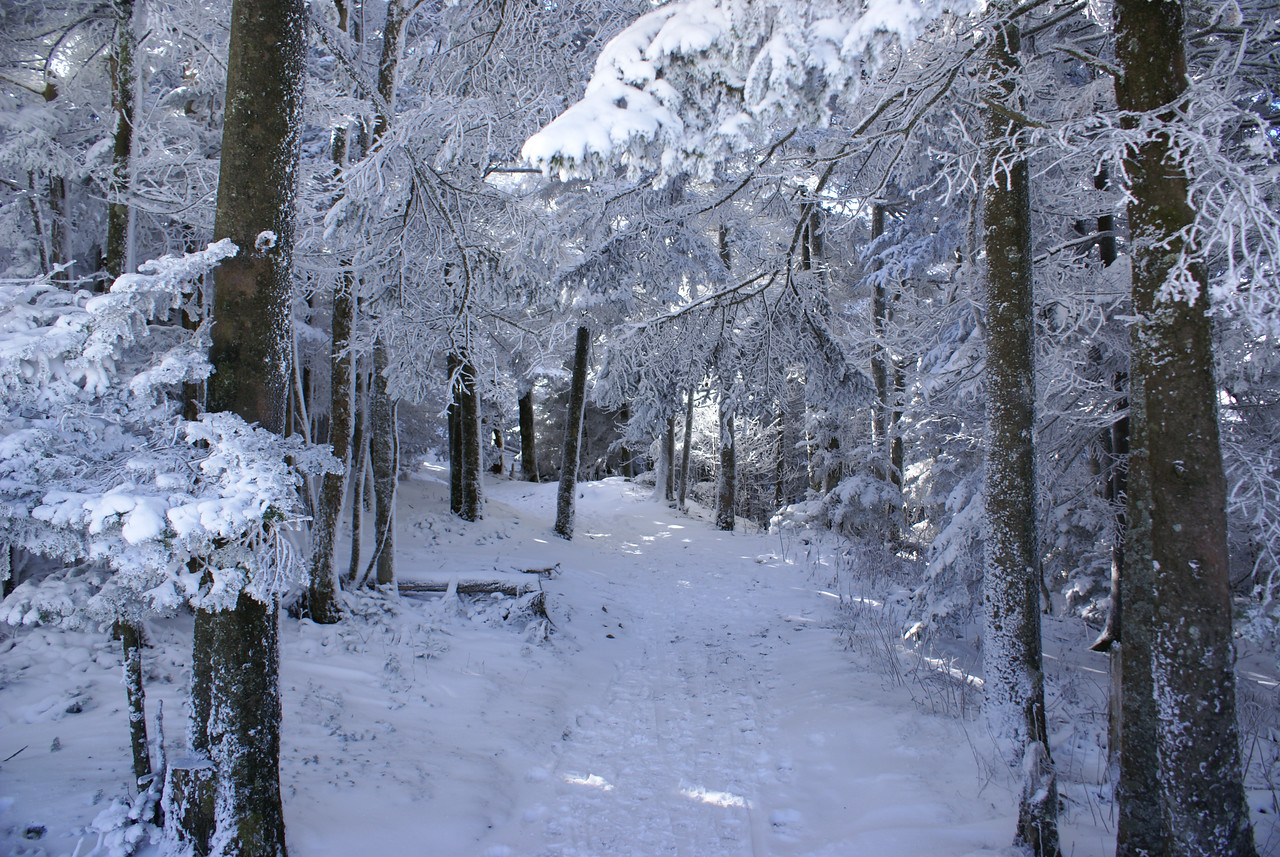 On the Cloudland Trail - Roan Mountain - January, 2008