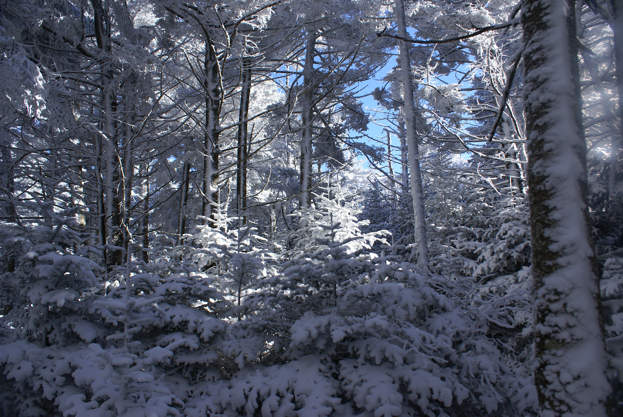 Sunlight filters through trees on Roan Mountain