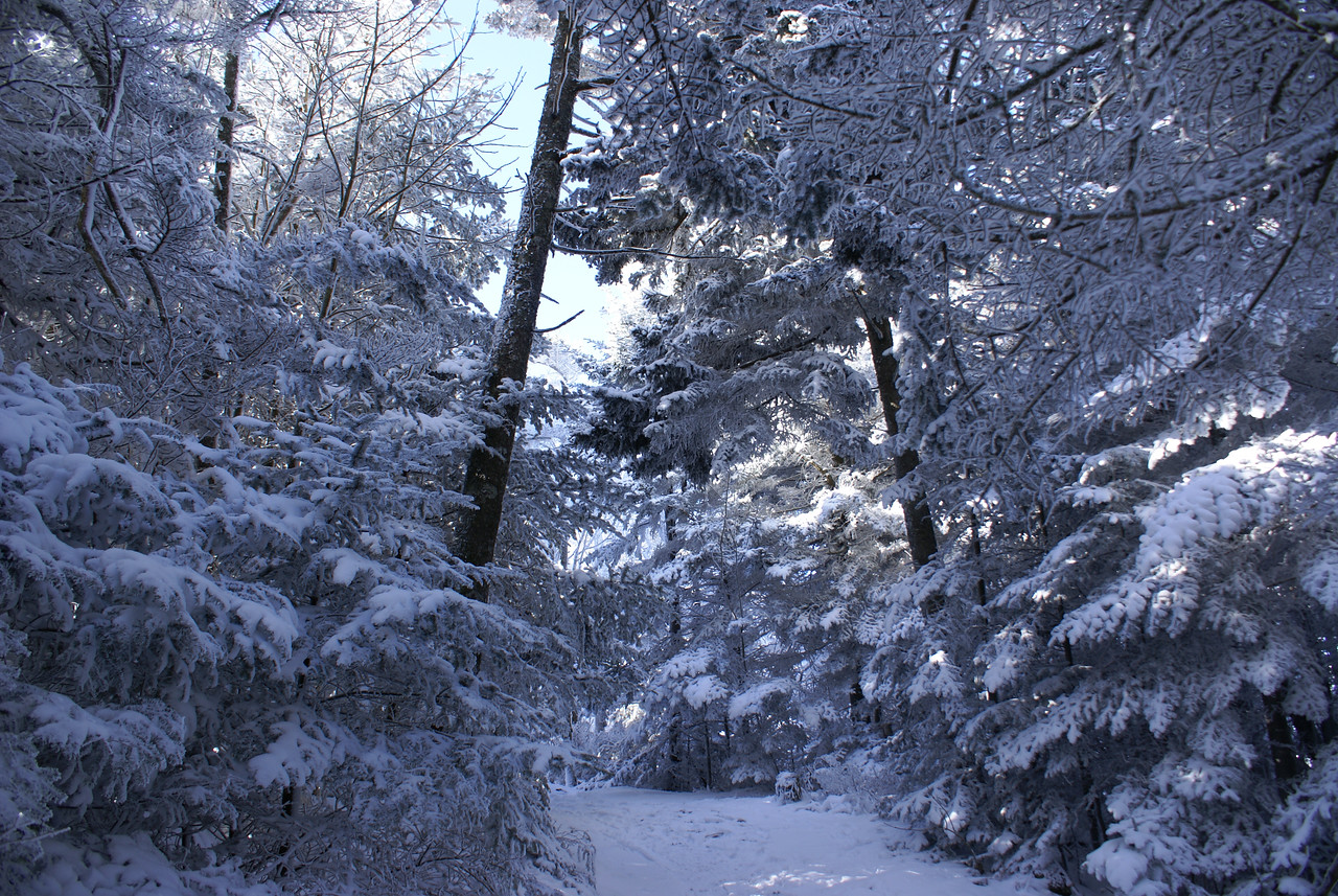 Continuing on the Cloudland Trail - Roan Mountain - January, 2008