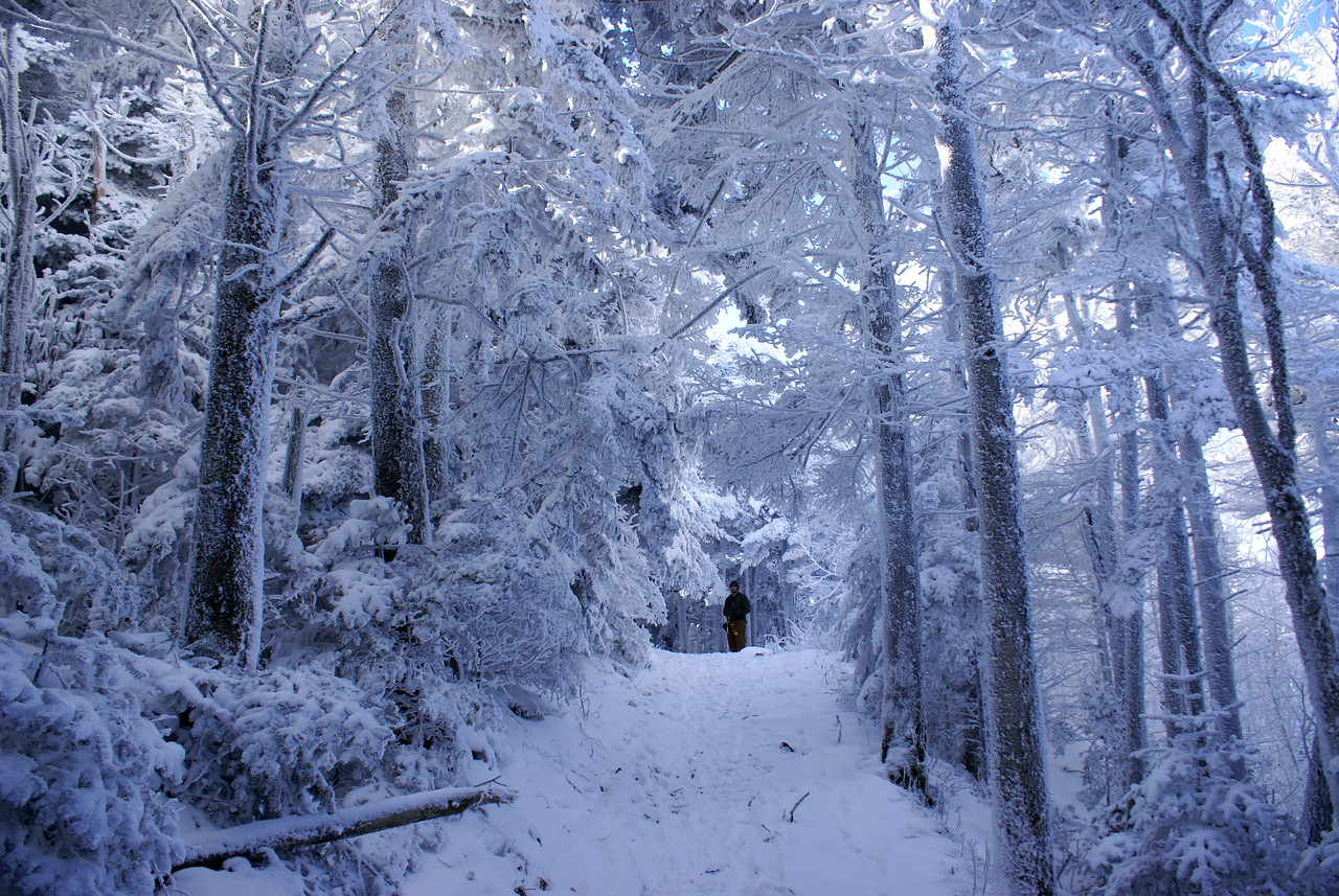 Tim on the Cloudland trail amid a canopy of snowy trees - Roan Mountain, 2008