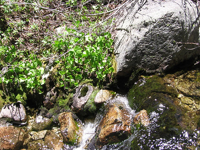 Gurgle and splosh, granite and moss.