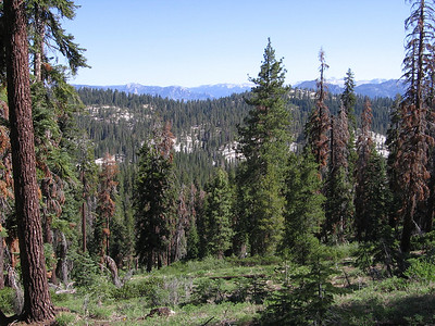 View to north from northern edge of Jennie Lakes Wilderness on trail to Weaver Lake. Gentle terrain.