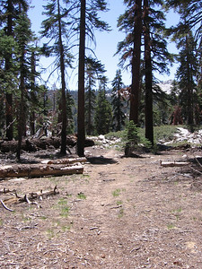 Well-maintained trails and landscapes in Jennie Lakes wilderness, Sequoia National Forest.