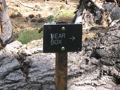 Camping area in Kings Canyon National Park. Don't camp here; anywhere there are bear boxes there will also be bears...