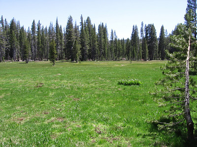 Rowell meadow, looking south from trail.