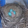 5-7-08  One hatched.