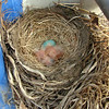 5/8/08 - Two hatched.