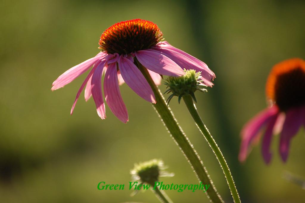 Slanted  Flower