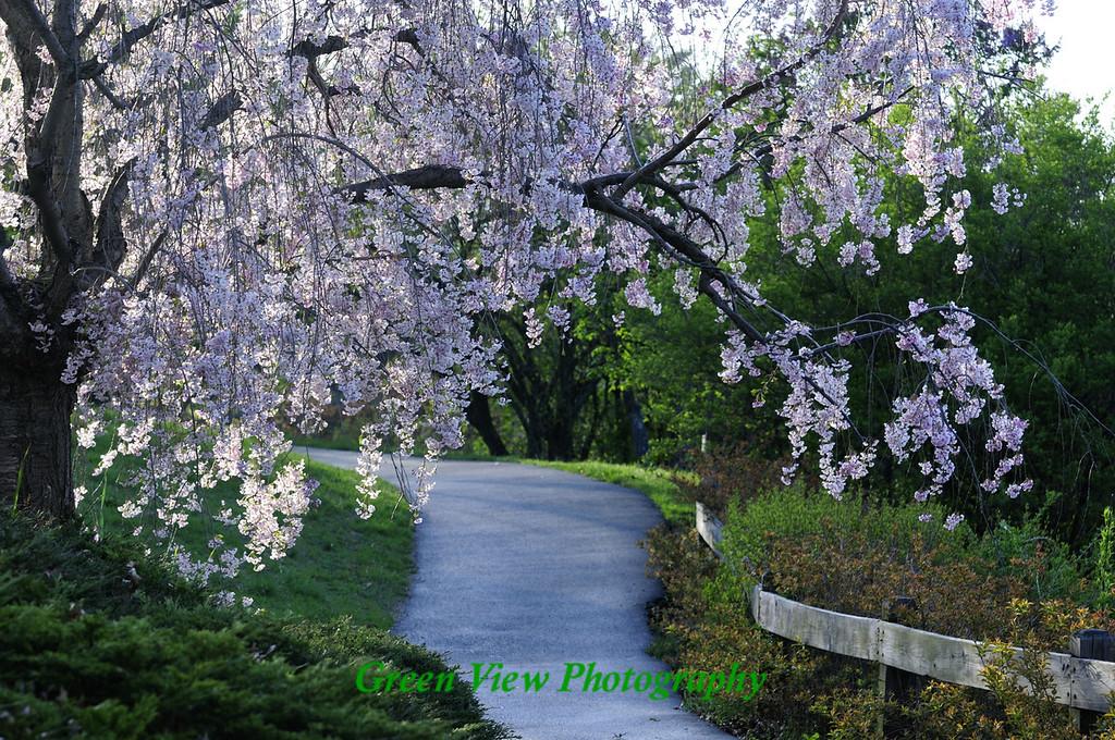 Flowered Archway