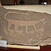 AZ-PFNP2017.10.11#869-Petroglyph. A extraordinary likeness of a Mountain Lion. Discovered in the Blue mesa of the Petrified Forest Nat. Park in 1934 and brought to Park headquarters to protect it from vandals. 1250 A.D. to the late 1300's.