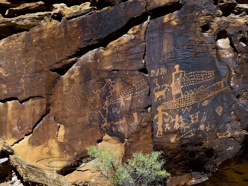 UT-NMC2017.10.7pm1.43#406- Petroglyphs. Nine Mile Canyon Utah.