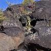 NM-PNM-PMT2019.11.12#1721.2. Piedras Marcadas Trail, Petroglyph Nat.Mon., New Mexico.