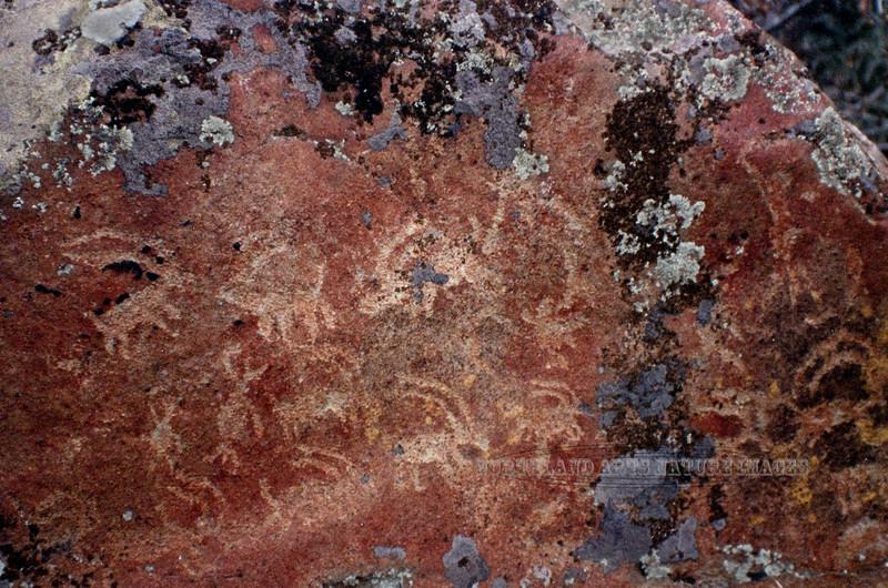 WA-1990.11#3635.3c. Zoomorphs of mostly bighorn sheep and a couple anthropomorph petroglyphs along the Snake River near Asotin Washington.