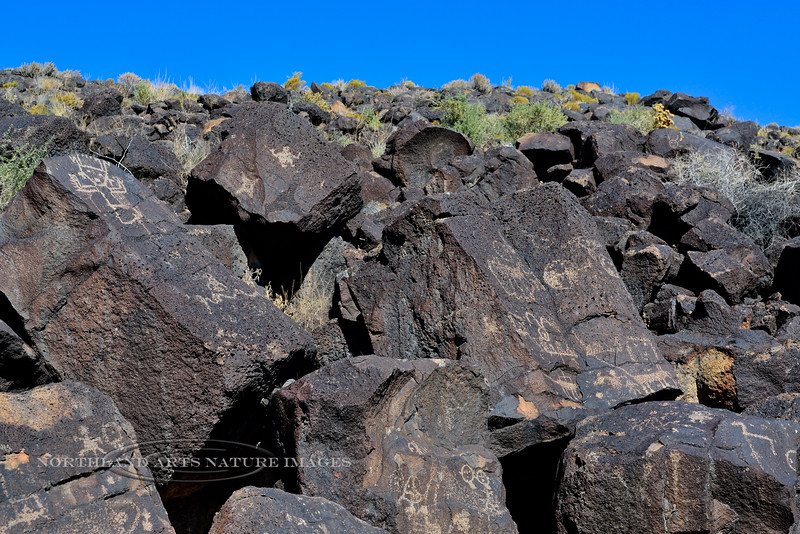 NM-PNM-PMT2019.11.12#2974.2. Piedras Marcadas Trail, Petroglyph Nat.Mon., New Mexico.