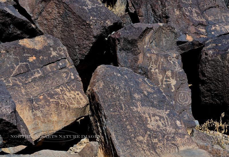 NM-PNM-PMT2019.11.12#2973.2.  Piedras Marcadas Trail, Petroglyph Nat.Mon., New Mexico.