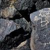 NM-PNM-PMT2019.11.12#1884.2. Piedras Marcadas Trail, Petroglyph Nat.Mon., New Mexico.