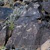 NM-PNM-PMT2019.11.12#2904.2. Piedras Marcadas Trail, Petroglyph Nat.Mon., New Mexico.