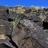 NM-PNM-PMT2019.11.12#1900.2. Piedras Marcadas Trail, Petroglyph Nat.Mon., New Mexico.