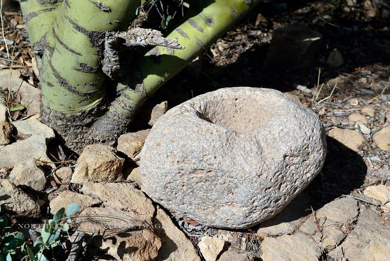 2-AZ-2017.12.14#037-Mortar. Used throughout the same time as the previous metate. Boyce Thompson Aboretum, Arizona.