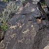 NM-PNM-PMT2019.11.12#1766.2. Piedras Marcadas Trail, Petroglyph Nat.MOn., New Mexico.