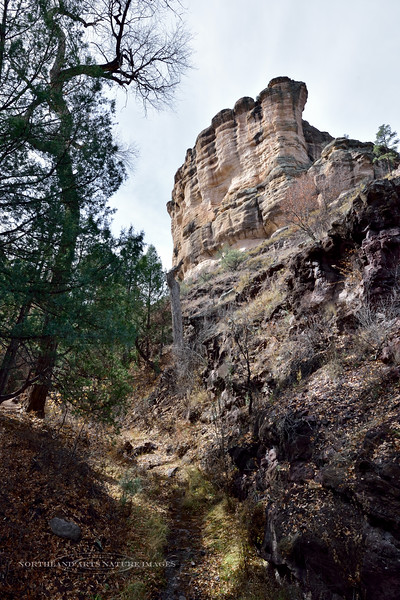 NM-GCD2-2019.11.9#3946.2. On the trail up to the cliff Dwellings. Gila Wilderness, New Mexico.