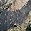 AZ-PFNP2017.10.11#1087-Petroglyphs. Near Puerco Pueblo. Petrified Forest Nat. Park Arizona.