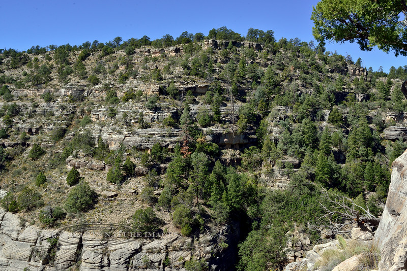 AZ-WCNM-2019.10.2#340.3. Two Anasazi dwellings are left and right of the dead orange tree branches in the center of this image. Walnut Canyon near Flagstaff Arizona.
