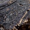 AZ-PFNP2017.10.11#1090-Petroglyphs. Near Puerco Pueblo. Petrified Forest Nat. Park Arizona.