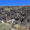 NM-PNM-PMT2019.11.12#2995.2. Piedras  Marcadas Trail, Petroglyph Nat.Mon., New Mexico.