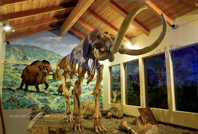 ID-2014.5.14#131.3X. The Tolo Lake Columbian Mammoth. Exhibit Pavilion, Grangeville Idaho.