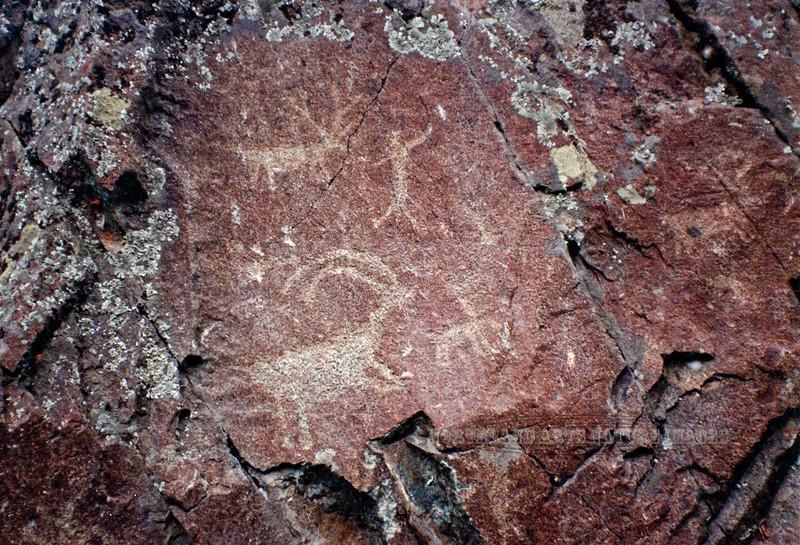 WA-1990.11#3635.2c. Petroglyphs, Zoomorphs of Elk & Bighorn sheep with what might be an anthropomorph. Along the Snake River upstraem of Asotin Washington.