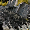 NM-PNM-PMT2019.11.12#1832.2. Piedras Marcadas Trail, Petroglyph Nat.Mon., New Mexico.
