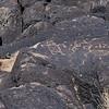 NM-PNM-PMT2019.11.12#1670.2. Piedras Marcadas Trail, Petroglyph Nat.Mon., New Mexico.