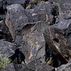 NM-PNM-PMT2019.11.12#1892.2. Piedras Marcadas Trail, Petroglyph Nat.Mon., New Mexico.